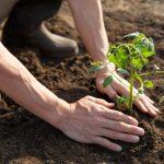 Rok pôdy a mladý farmár