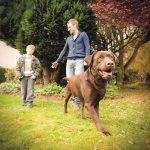 Elektronické rádiové oplotenie: Tipy, ako naň vycvičiť svojho psa.