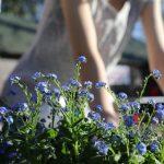 Tipy na starostlivosť o záhradu